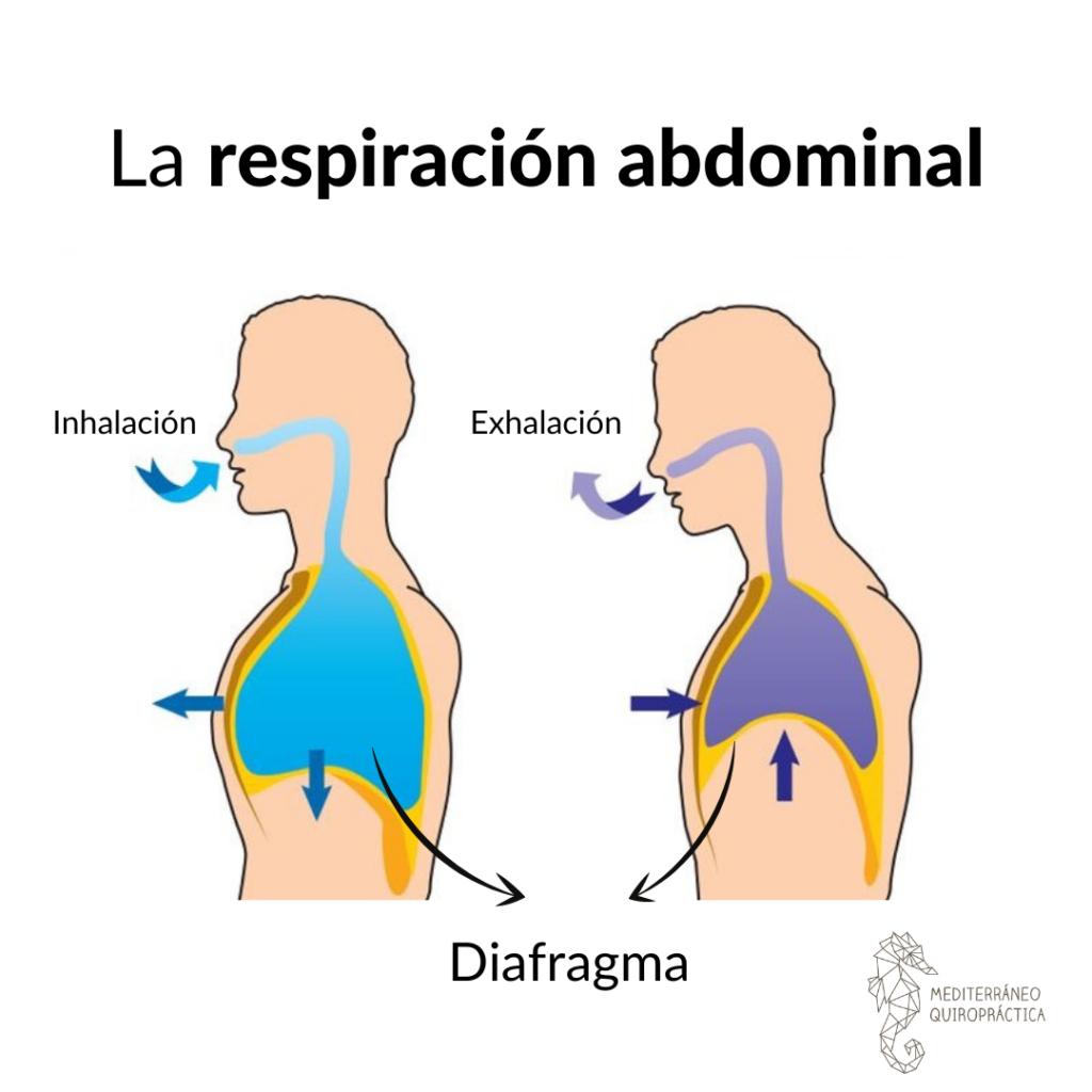 respiracion abdominal
